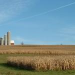 Skuteczne środki na chwasty odporne w pszenicy